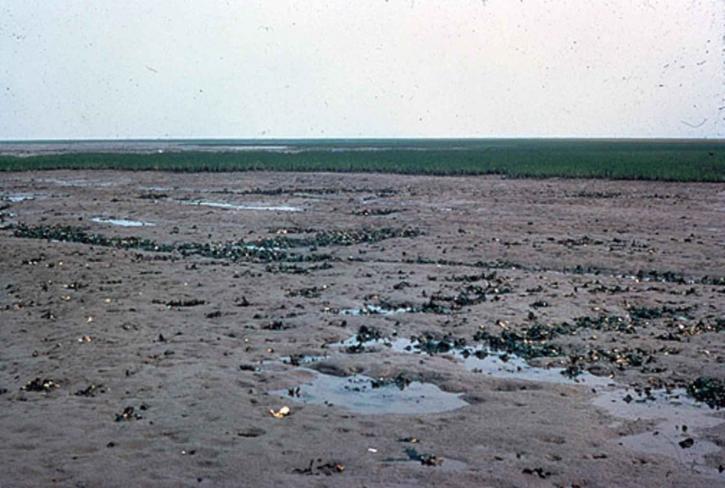 boue, appartements, terre, la terre, la terre, l'eau
