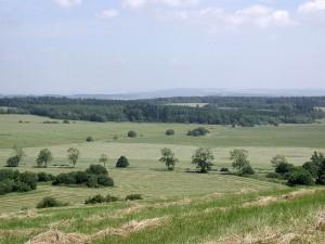 pasture, summer