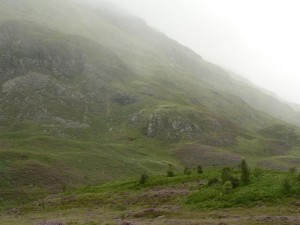 écossais, campagne, champ