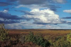selawik, Wohnungen, Felder, Landschaft