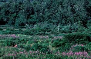 summer, green, fields