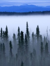 голубой, горы, лес