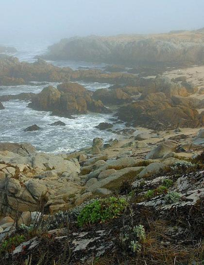 foggy, beaches, ocean