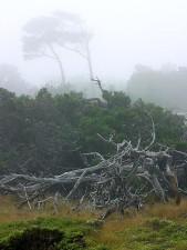 Monterey, nebbia