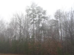 stromy, hmla