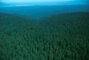 aerial, photography, forest, habitat