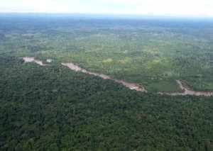 aerial, green, African, forest, Liberia