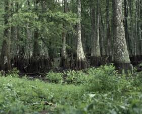 de près, zone marécageuse, la forêt, les arbres