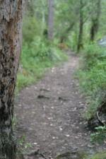 bark, focus, path, background