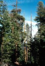 ours, vallée, désert, refuge, arbres