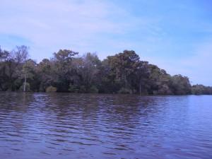 bottomland, metsä, elinympäristö