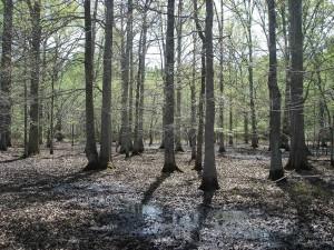 bottomland, bois dur, forêt, peu, rivière, désert, refuge