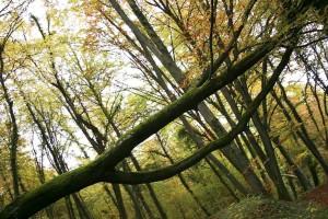 törött, fa, erdő