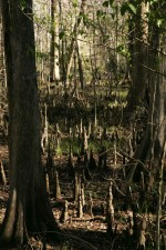 coastal, forest, swamp, water, forest