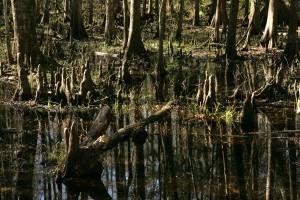 côtières, des forêts, des zones humides
