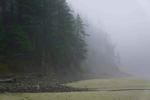 côtier, brin, vieux, croissance, forêt, oswald, à l'ouest, état, parc, Oregon