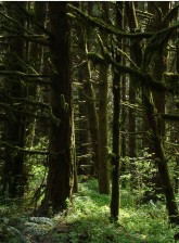 sombre, forêt, scénique