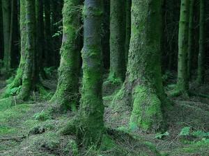 foncé, moussu, forêt