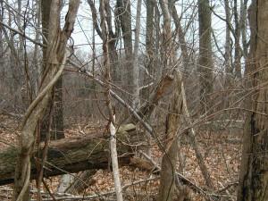 secas, árboles, bosque, caído, hojas