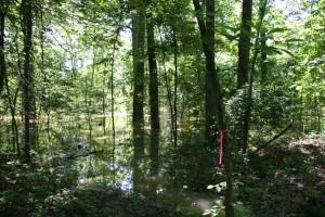 flooded, forest, spring