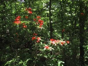 fleurs, forrest