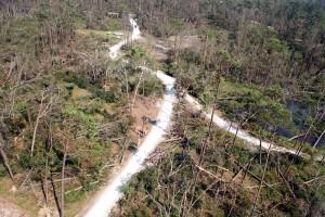 skov, orkanen