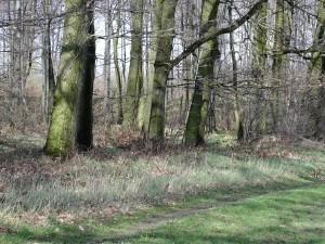 forêt, à côté, sur le terrain