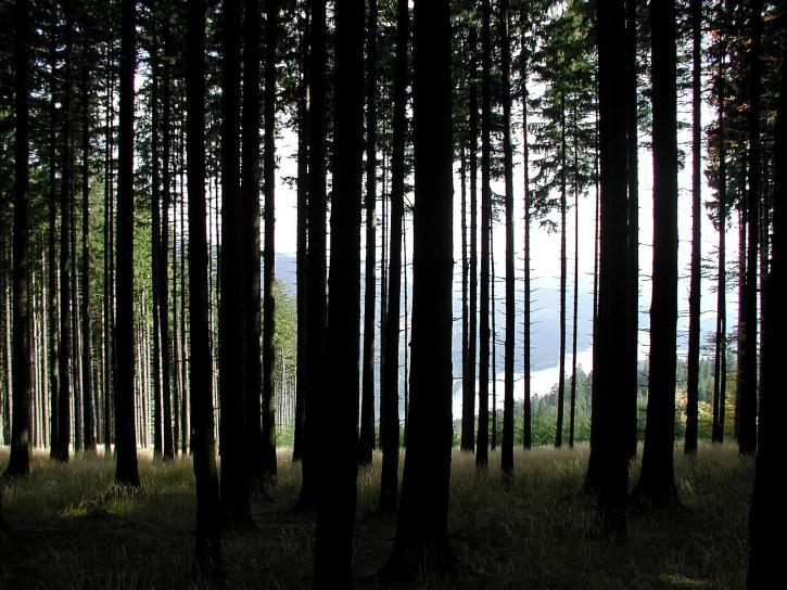 forêt, sombre