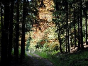 forêt, sombre, route