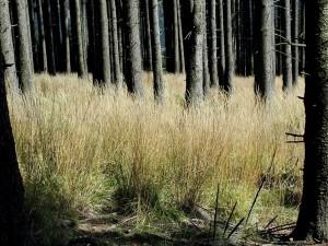 bosque, abajo, a nivel