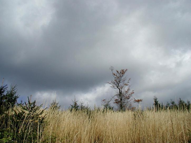 forest, fields