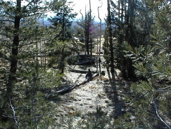 floresta, árvore