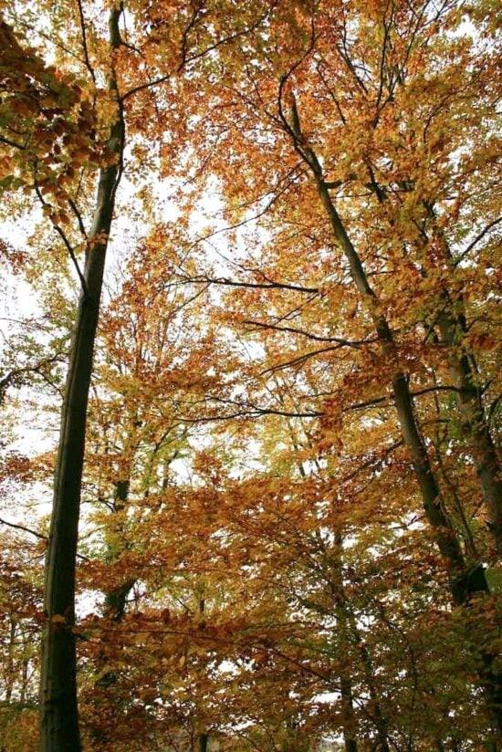 floresta, setembro