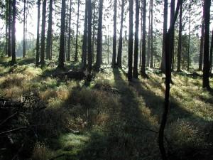 forest, spring