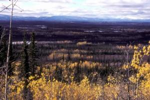 forest, overlook
