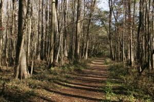 forêt, piste, route, forêt