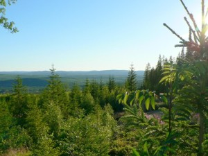 forest, view