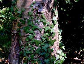 forêt, bois, scènes