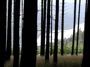 forêt, bois