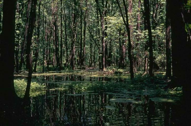 boisées, les zones humides
