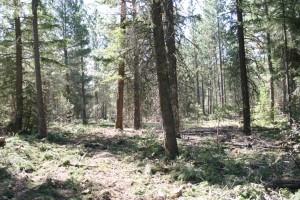 леса, истончение