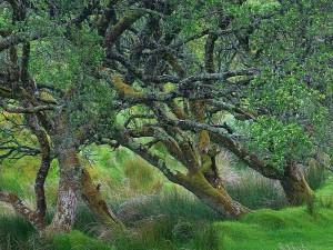 Glengesh, passe, Irlande, vieux, arbre