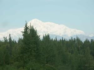verde, bosque, montaña, Mckinley, fondo, Denali, nacional, reserva, parque