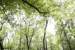 green, light, forest