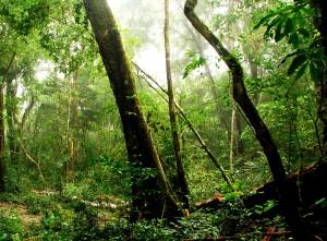 guatemala, Maya, biosphere, reserve