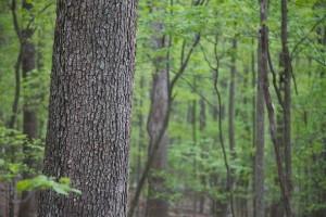 løvtre, trær, skog