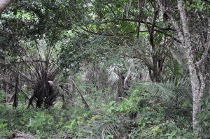 꿰 뚫을 수 없는, 열 대, 숲