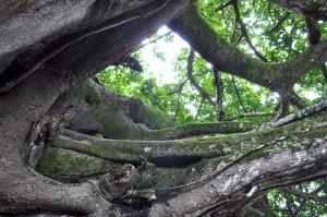 prolíná, větve, stromy, Les