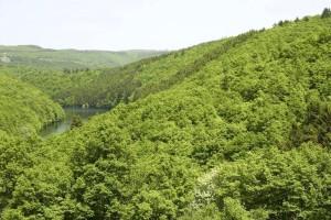 prašuma, šuma