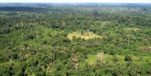 liberia, aérien, forêt